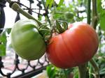 Tomato0622_1